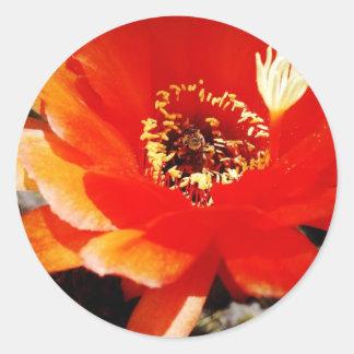 Una abeja en una flor roja pegatina redonda