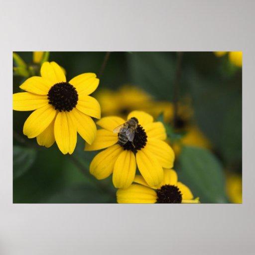 Una abeja sobre la jerarquía de los flover póster