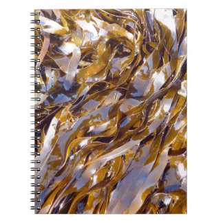 Una alga marina marrón en la superficie del mar spiral notebooks