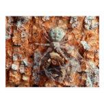 Una araña camuflada de la corteza postal