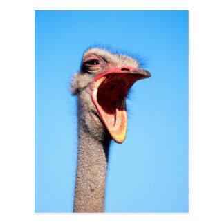 Una avestruz que muestra la agresión postal