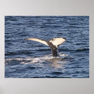 'Una ballena de un Tail Póster