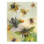 Una bandada de las postales hermosas de las abejas