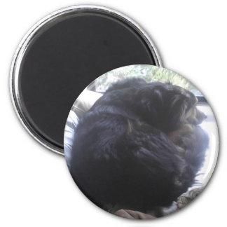 Una bola del perrito imán redondo 5 cm
