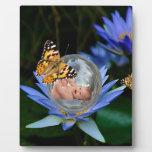 Una burbuja linda de la mariposa del lirio del placa de madera