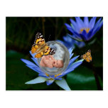 Una burbuja linda de la mariposa del lirio del postales