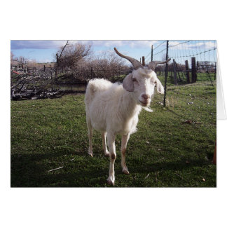 Una cabra joven tarjeton