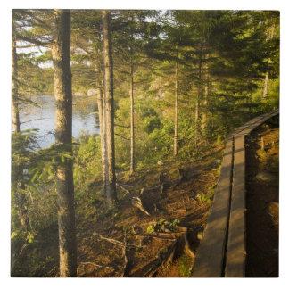 Una calzada de madera en el parque nacional Maine  Azulejo Cuadrado Grande