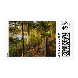 Una calzada de madera en el parque nacional Maine Sellos