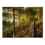 Una calzada de madera en el parque nacional Maine  Postales