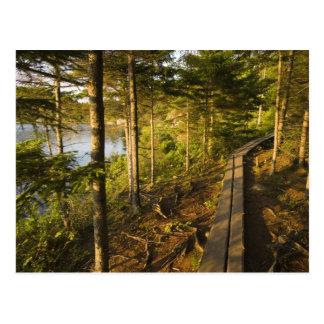 Una calzada de madera en el parque nacional Maine Tarjetas Postales