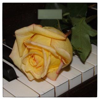 Una canción de un color de rosa báscula