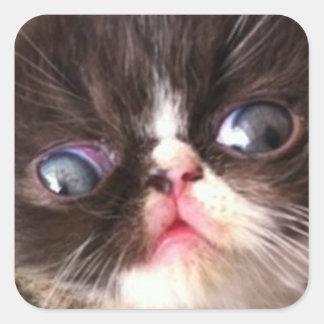 Una cara gloriosa de un gato pegatinas cuadradases