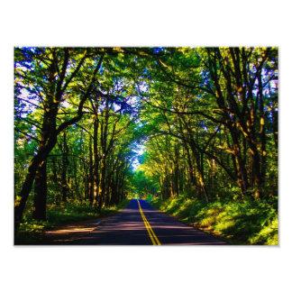 Una carretera con curvas envuelta en árboles cojinete