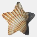 una cáscara del mar calcomanías forma de estrella personalizadas