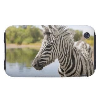 Una cebra de montaña adolescente (cebra del Equus) iPhone 3 Tough Funda