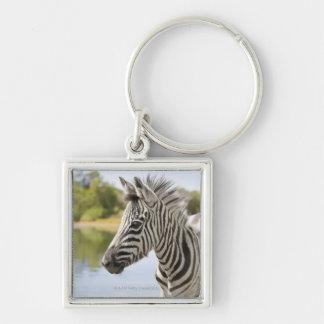 Una cebra de montaña adolescente (cebra del Equus) Llavero Personalizado