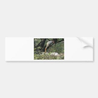 Una cigüeña pintada que alimenta sus jóvenes en el etiqueta de parachoque