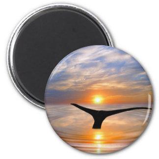 Una cola de las ballenas en la puesta del sol imán para frigorifico