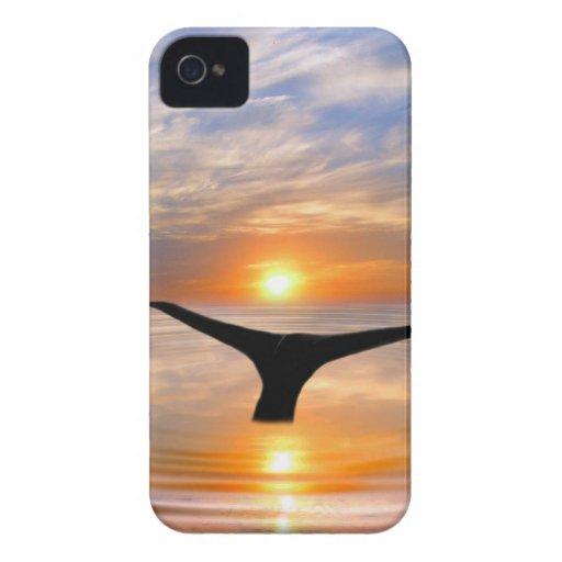 Una cola de las ballenas en la puesta del sol iPhone 4 Case-Mate cárcasas