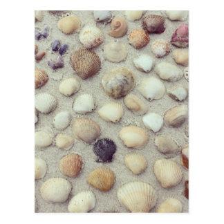 Una colección de Seashells Tarjetas Postales
