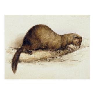Una comadreja, 1832 (w/c, ove de la pluma, de la t tarjeta postal
