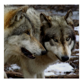 Una conversación del lobo póster