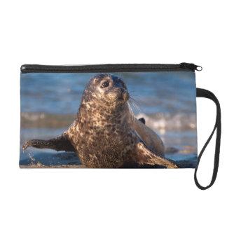 Una cría de foca que viene en tierra en la piscina