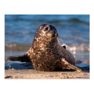 Una cría de foca que viene en tierra en la piscina tarjetas postales