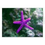 Una estrella de mar púrpura tarjetón