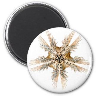 Una estrella frágil imán redondo 5 cm