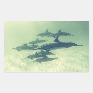 Una familia de delfínes pegatina rectangular