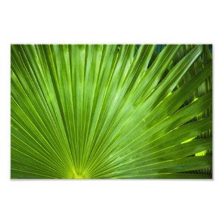 Una fan del verde arte fotografico