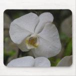 Una flor blanca de la orquídea en jardín nacional