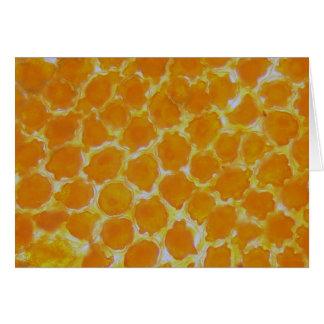 Una flor de los tagetes debajo del microscopio tarjeta de felicitación