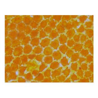 Una flor de los tagetes debajo del microscopio tarjeta postal