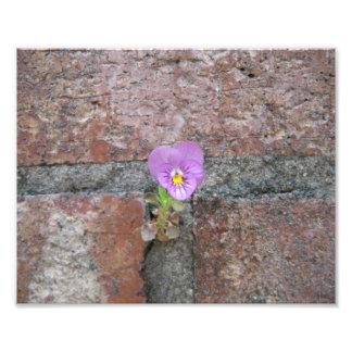 Una flor del hormigón fotos