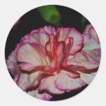Una flor del llenador del otoño etiquetas redondas