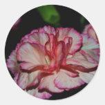 Una flor del llenador del otoño pegatinas