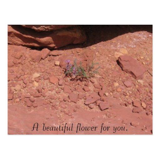 Una flor hermosa para usted tarjetas postales