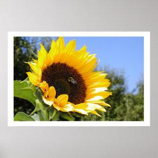 Una flor más grande de Sun Póster