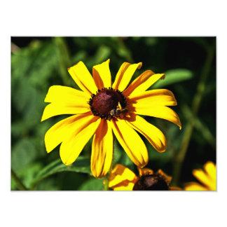 Una flor Negro-Observada amarillo brillante de Sus Cojinete