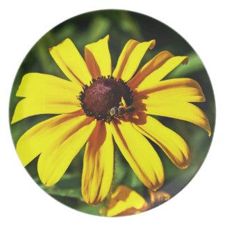 Una flor Negro-Observada amarillo brillante de Sus Plato