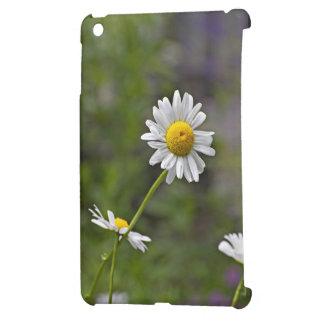 Una flor salvaje blanca de la margarita en un