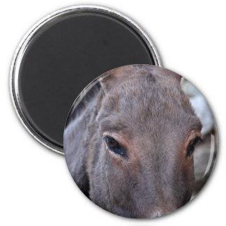 Una foto del detalle de una cabeza del burro imán redondo 5 cm