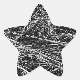 Una foto monocromática de la hierba pegatina en forma de estrella
