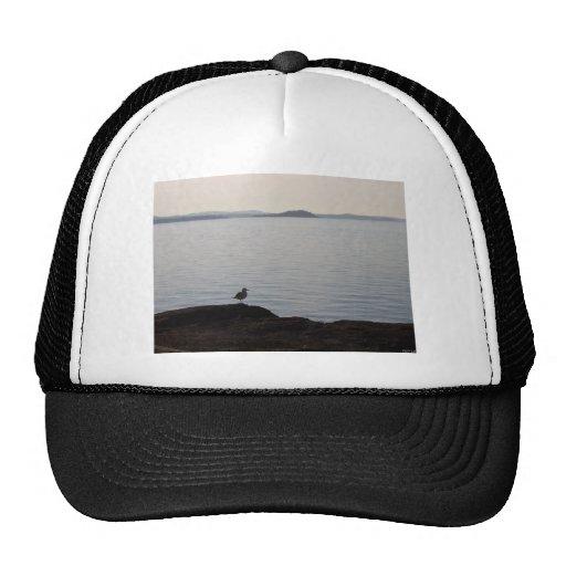 Una gaviota soña gorras