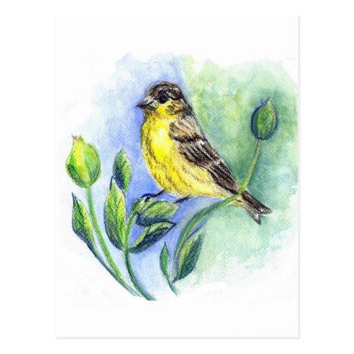 Una hembra del Goldfinch, lápiz de la acuarela Postal