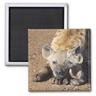 Una hembra manchó el Hyena y su cachorro, Kruger Imán Cuadrado