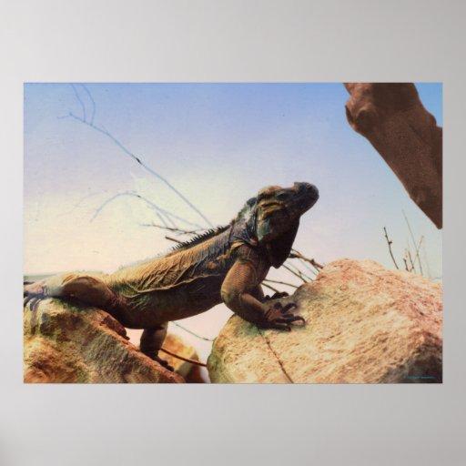 Una iguana del rinoceronte examina su ámbito impresiones